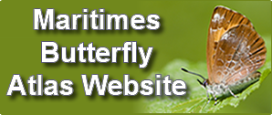 Maritimes Butterfly Atlas Website Button
